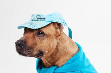 サンバイザーをつけた犬