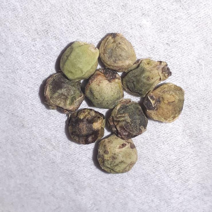 緑胡椒(グリーンペッパー)
