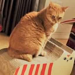 お気に入りの猫用爪とぎ器